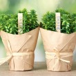 Thyme herb plants in pots with beautiful paper decor on wooden table on green background — Stock Photo #10941089