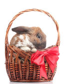 Lop-eared rabbit in a basket with red bow isolated on white — Stock Photo