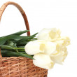 Beautiful tulips in basket isolated on white — Stock Photo #10978282