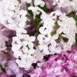 Bouquet of lilacs close-up — Stock Photo #10978371