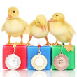 Stok fotoğraf: Three duckling on championship podium isolated on white