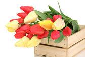 Lindas tulipas em caixa isolado no branco — Foto Stock