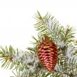 Christmas cone on the tree on white background — Foto de Stock