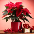 Beautiful poinsettia in flowerpot, and Christmas balls and gifts on wooden table on red background — Stock Photo