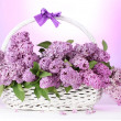 Beautiful lilac flowers in basket on purple background - Stock Photo