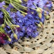 Cornflowers on grey backgraund — Stock Photo