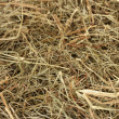 Royalty-Free Stock Photo: Golden hay texture background close-up