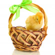 Beautiful little chicken in basket isolated on the white - Stock Photo