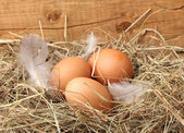 Chicken eggs in a nest on wooden background — Stock Photo