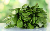 Sorrel on green background — Stock Photo