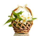 Beautiful jasmine flowers with leaves in basket, isolated on white — Stock Photo