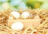 White eggs in a wooden box on straw on green background close-up — Stock Photo