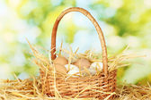 White and brown eggs in a wicker bascet on straw on green background — Stock Photo