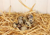 Quail eggs in the straw on white wooden background — Stock Photo