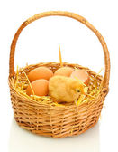Beautiful little chicken, eggshell and eggs in basket isolated on the white — Stock Photo