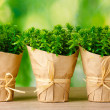 Thyme herb plants in pots with beautiful paper decor on green background on wooden table — Stock Photo #10992603