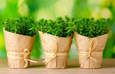 Thyme herb plants in pots with beautiful paper decor on green background on wooden table — Stock Photo