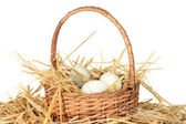 White eggs in a wicker bascet on straw on white background — Stock Photo
