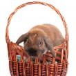 Royalty-Free Stock Photo: Lop-eared rabbit in a basket isolated on white