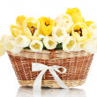 Beautiful tulips in basket isolated on white — Stock Photo #11027925
