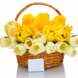 Beautiful tulips in basket isolated on white — Zdjęcie stockowe