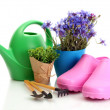 Watering can, galoshes, tools and plants in flowerpot isolated on white — Stock Photo #11037914