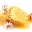 Golden honeycombs, wildflowers and wooden drizzler with honey isolated on white — Stock Photo #11046022