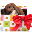 Royalty-Free Stock Photo: Lop-eared rabbit in a gift box with red bow isolated on white