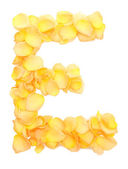 Orange rose petals forming letter E, isolated on white — Stock Photo
