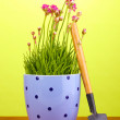 Pink flowers in pot with instruments on wooden table on green background - Stockfoto