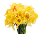 Beautiful bouquet of yellow daffodils isolated on white — Stock Photo