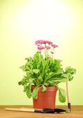 Różowe kwiaty w puli instrumentów stół drewniany na zielonym tle — Zdjęcie stockowe