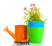 Regador, ferramentas e planta em vaso isolado no branco — Fotografia Stock