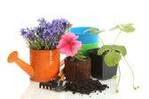 Regador, ferramentas e plantas em vaso isolado no branco — Fotografia Stock