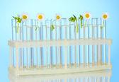 Tubos de ensayo con una solución transparente y la planta en primer plano de fondo azul — Foto de Stock