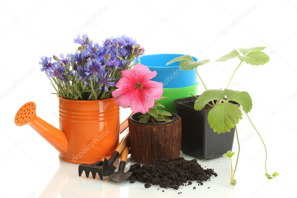 Watering can,  tools and plants in flowerpot isolated on white — Stock Photo #11071579