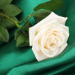 Beautiful rose on green cloth — Stok fotoğraf