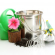 Watering can, bucket, tools and plants in flowerpot isolated on white — Photo