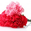 Stock Photo: Bouquet of carnations isolated on white