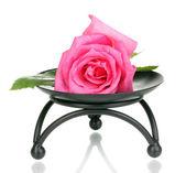 Красивая роза на металлической подставке, изолированные на белом — Стоковое фото