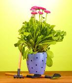 Rosa flores en maceta con los instrumentos en la mesa de madera sobre fondo verde — Foto de Stock