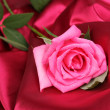 Beautiful rose on dark pink cloth — Stok fotoğraf