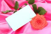 Vacker ros på rosa tyg — Stockfoto