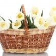 Beautiful tulips in basket isolated on white — Stock Photo #11152000