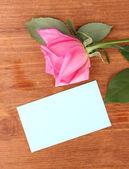 Linda rosa no pano lilás — Fotografia Stock