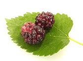 Mulberry leaves and berries on white background close-up — Stock Photo