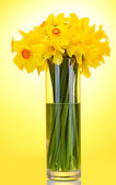 Beautiful yellow daffodils in transparent vase on yellow background — Stock Photo