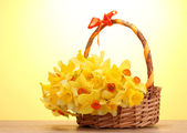 Beautiful yellow daffodils in basket with bow on wooden table on yellow background — Stock Photo