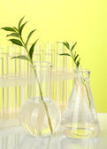 Test-tubes with a transparent solution and the plant on yellow background close-up — Stock Photo