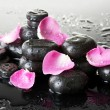 Spa stones with drops and rose petals on grey background - Стоковая фотография